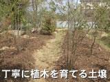 丁寧に植木を育てる土壌