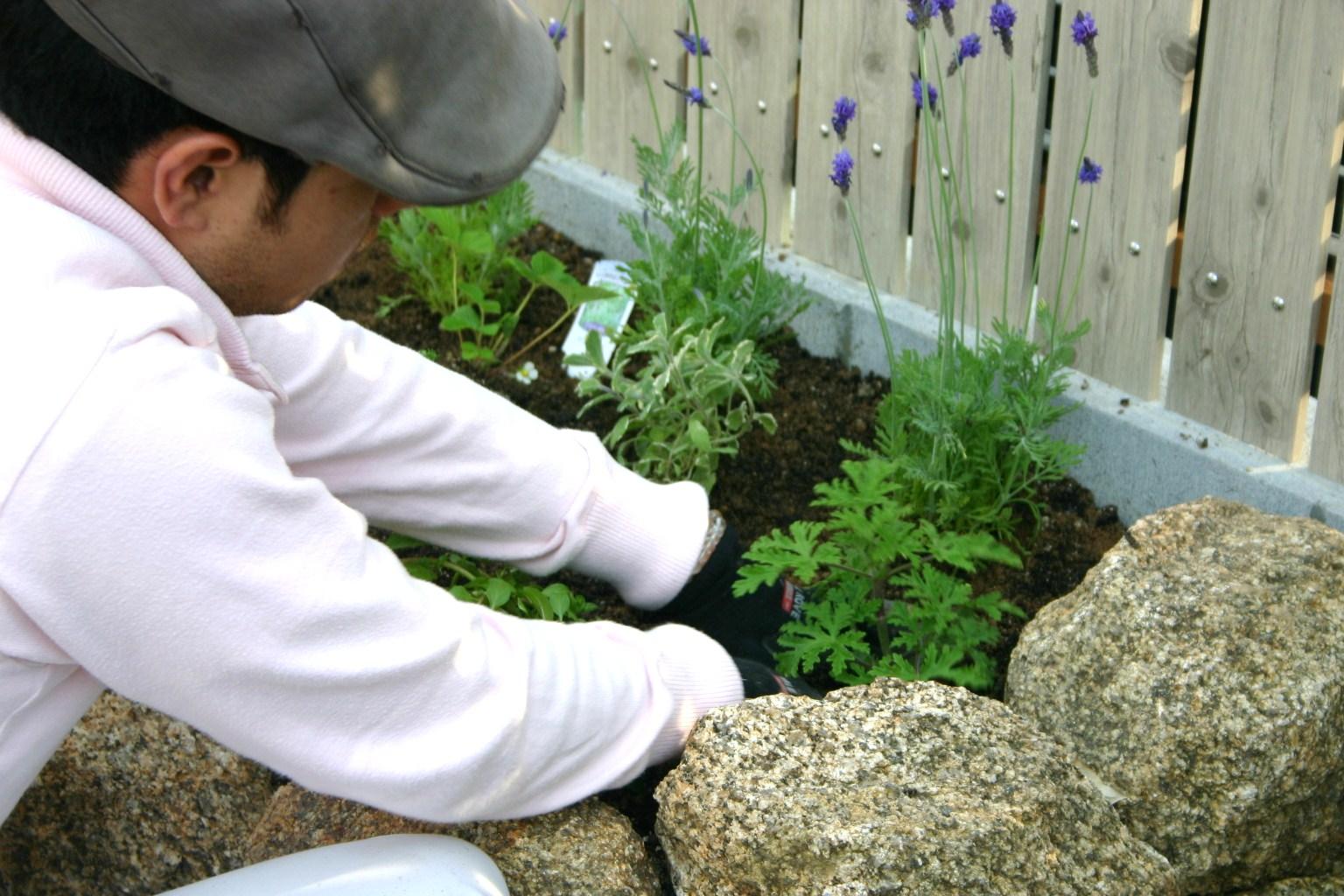キッチンガーデン植栽