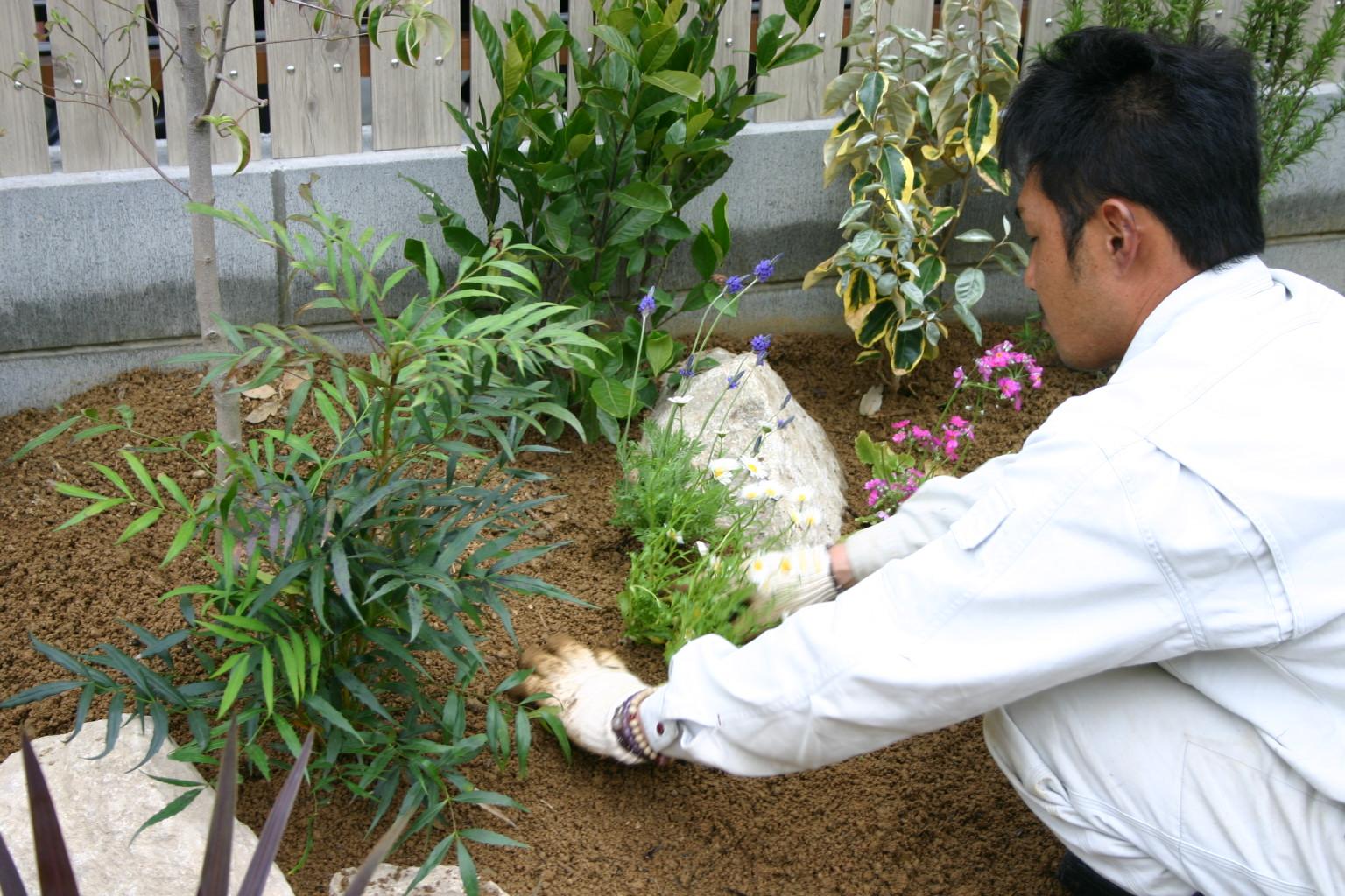 各種下草植栽
