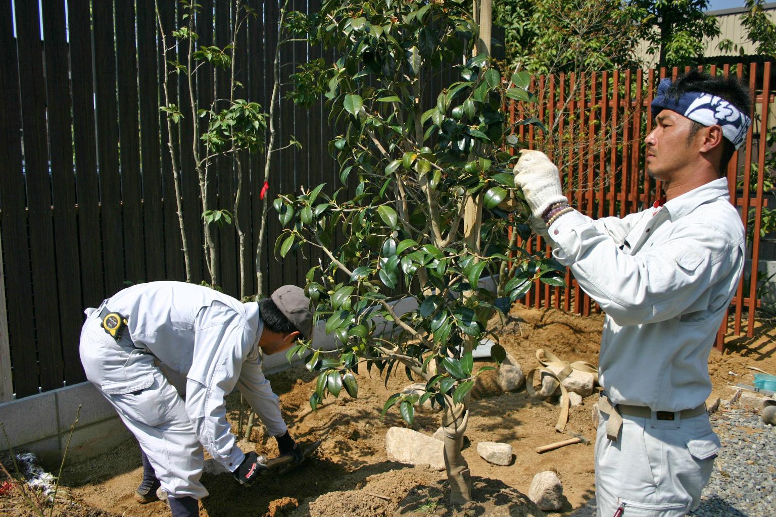 ソヨゴ・ツバキ植栽