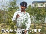 苗木から育てています