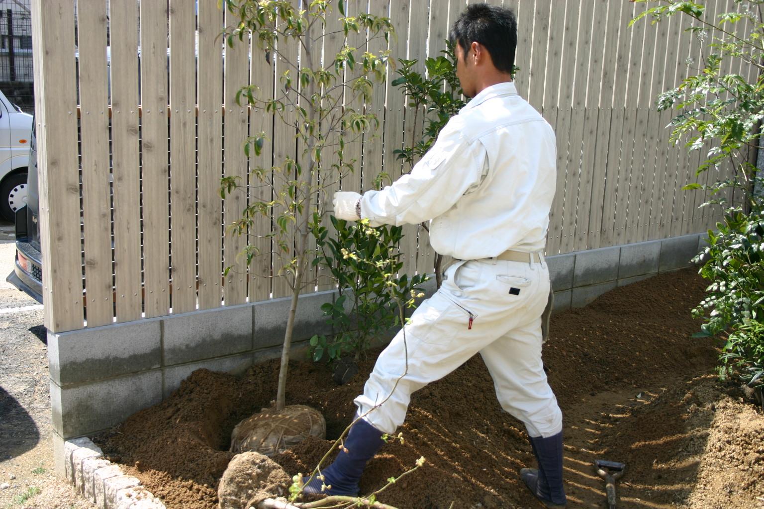 サブツリー植栽