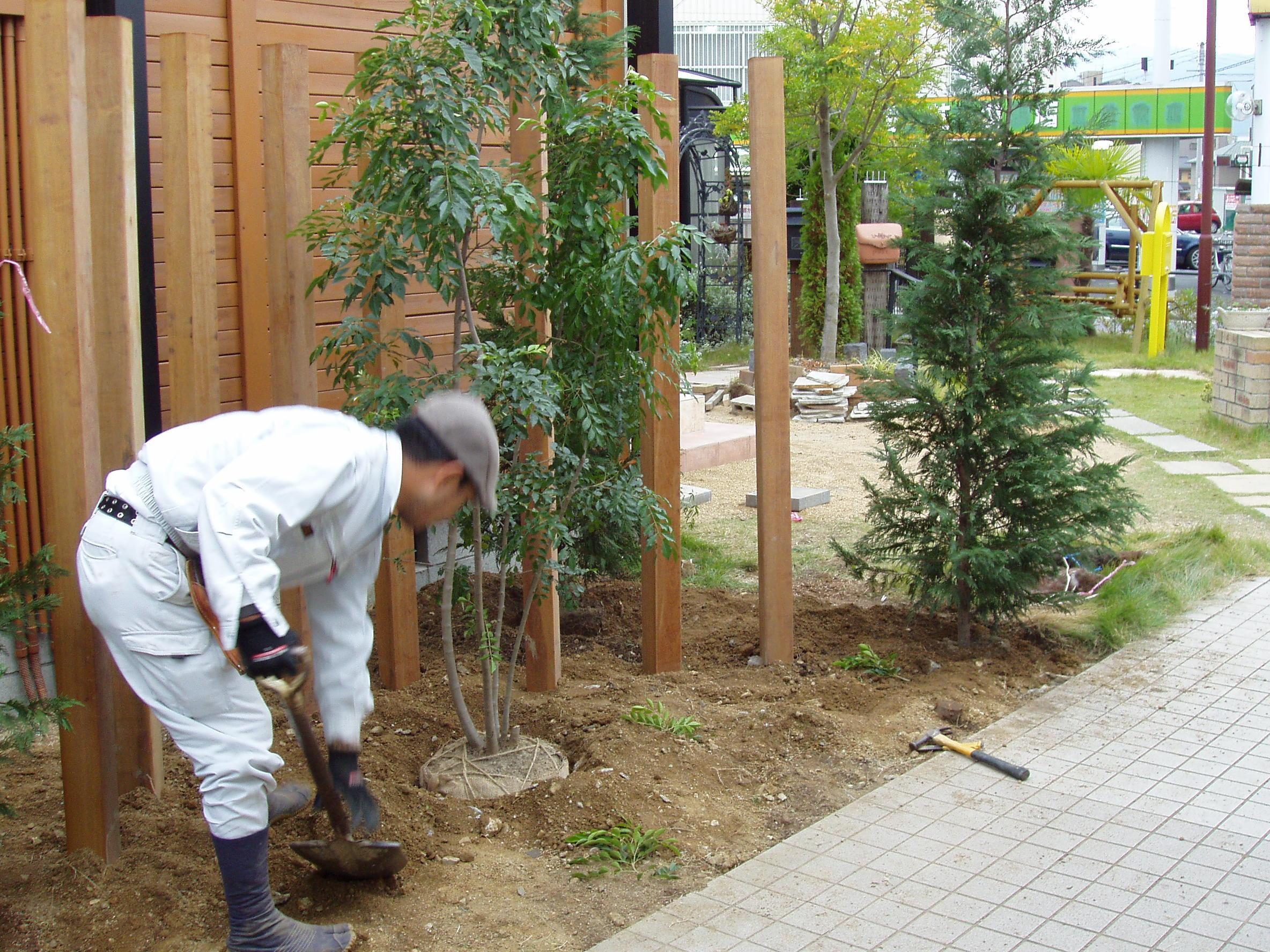 6.シマトネリコ植栽